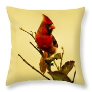 Red Cardinal No. 2 - Kauai - Hawaii Throw Pillow