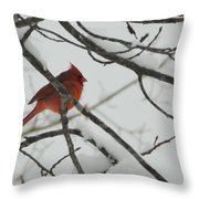 Red Cardinal On Snow Covered Tree Limb Throw Pillow
