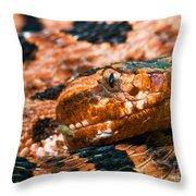 Red Carolina Pygmy Rattlesnake Throw Pillow