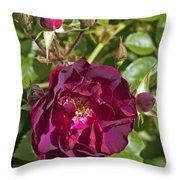 Red Climbing Rose Throw Pillow