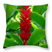 Red Cone Ginger Throw Pillow