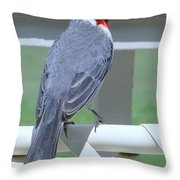 Red Crested Cardinal No 2 Throw Pillow