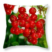 Red Currants Ribes Rubrum Throw Pillow