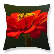 A Bee's Eye View Throw Pillow
