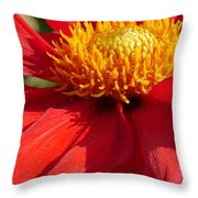 Red Dahlia Coccinea Throw Pillow