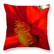 Red Dahlia Elegance Throw Pillow