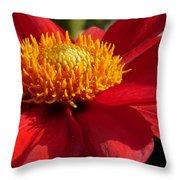 Red Dahlia Starlet Throw Pillow