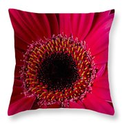 Red Daisy Close Up Throw Pillow
