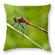 Red Darter Throw Pillow