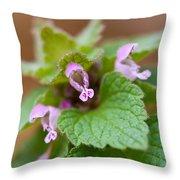 Red Deadnettle Throw Pillow