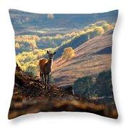 Red Deer Calf Throw Pillow
