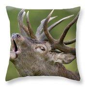 Red Deer Cervus Elaphus Stag Bugling Throw Pillow