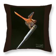 Red Dragonfly On An Antenna Throw Pillow