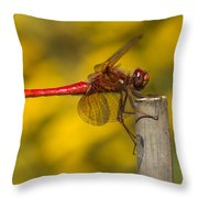 Red Dragonfly Waiting Throw Pillow