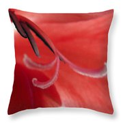 Red Dream - Gladiolus Throw Pillow by Ben and Raisa Gertsberg