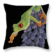 Red Eye  Throw Pillow by Susan Candelario
