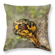 Red Eyed Alabama Box Turtle - Terrapene Carolina Throw Pillow