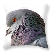 Red-eyed Pigeon Throw Pillow