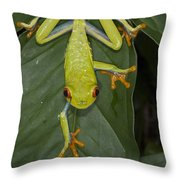 Red-eyed Tree Frog Costa Rica Throw Pillow