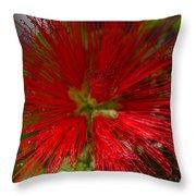 Red Fairy Duster Calliandra Californica Throw Pillow