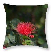 Red Flower Spraying Throw Pillow