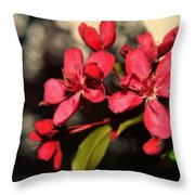 Red Flowering Crabapple Blossoms Throw Pillow