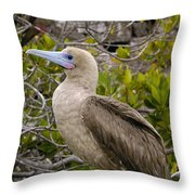 Red-footed Booby Galapagos Islands Throw Pillow
