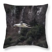 Red Footed Booby In Flight Throw Pillow