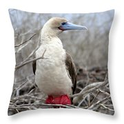 Red-footed Booby Throw Pillow