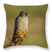 Red Footed Falcon Falco Vespertinus 4 Throw Pillow