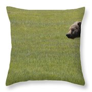 Red Fox  And Grizzly Bear Throw Pillow