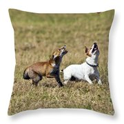 Red Fox Cub And Jack Russell Playing Throw Pillow by Brian Bevan