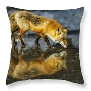 Red Fox Has A Drink Throw Pillow