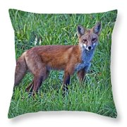 Red Fox In A Field Throw Pillow