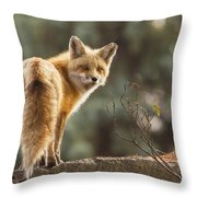 Red Fox In The Sunset Throw Pillow