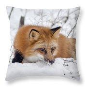 Red Fox Making Dinner Plans Throw Pillow