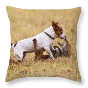 Red Fox Playing With Jack Russell Throw Pillow