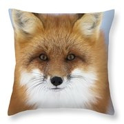 Red Fox Staring At The Camerachurchill Throw Pillow
