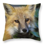 Red Fox Vulpes Vulpes, Gros Morne Throw Pillow