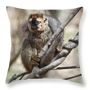 Red-fronted Lemur  Eulemur Rufifrons Throw Pillow