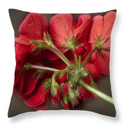 Red Geranium In Progress Throw Pillow
