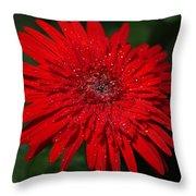Red Gerbera Daisy Delight Throw Pillow