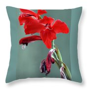 Red Gladiolus Throw Pillow