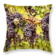 Red Grapes In Vineyard Throw Pillow