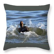 Red Head Duck Resurfaces With A Splash Throw Pillow