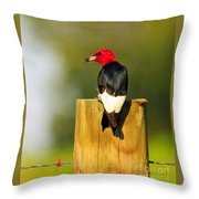 Red-headed Woodpecker Throw Pillow