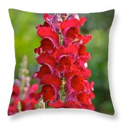 Red Snapdragon Throw Pillow
