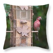 Red House Finch Throw Pillow