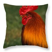 Red Jungle-fowl Throw Pillow