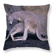 Red Kangaroo. Australia Throw Pillow